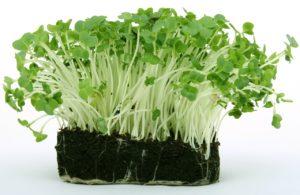 Schwefelhaltige Lebensmittel Gemüse Pflanzen Kresse