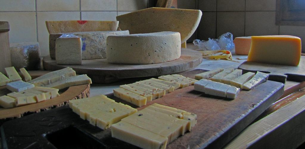 Käse Käsekulturen Joghurt probiotisch Präbiotisch Probiotika Präbiotika Kefir Ayran Hunde Katzen