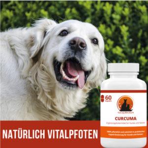 Curcuma Kapseln für Hunde