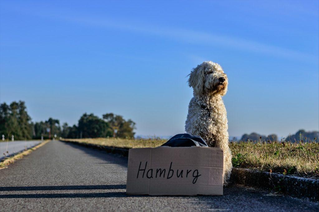 Hunde Stress Aussetzen Verhaltensstörung Freie Radikale
