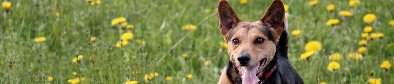 Pflanzliche Sekundärstoffe gesund wirkung hunde Katzen